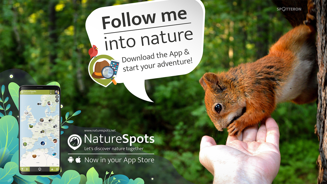 NSP Promo FollowMe Squirrel
