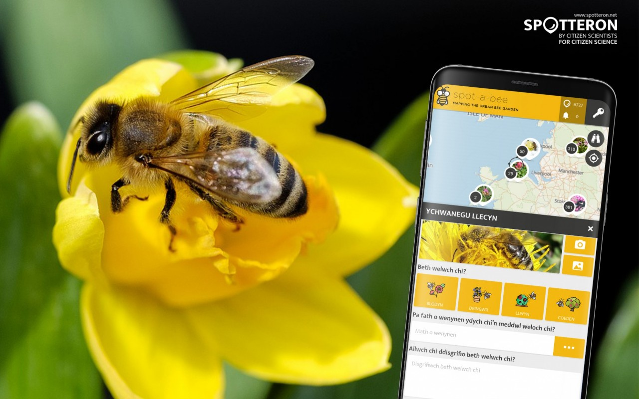 Spot-A-Bee, the Citizen Science App about bees and plants in cities, is now also available in Welsh. Croeso!
