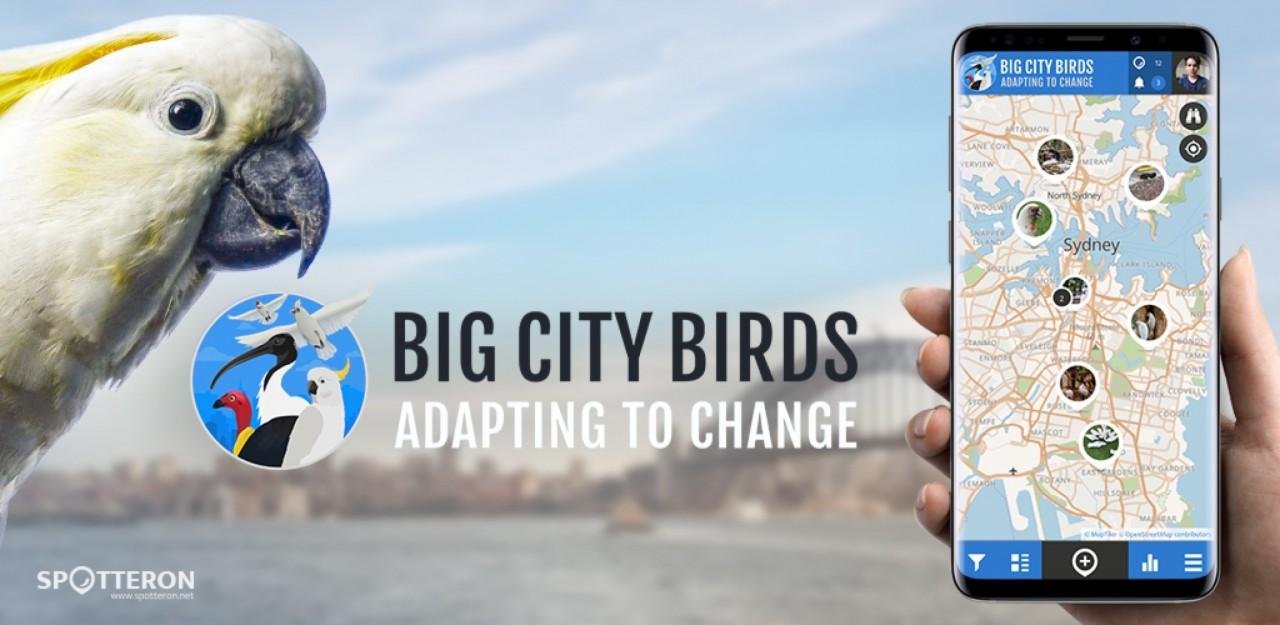 Big City Birds - A New Project on the SPOTTERON Citizen Science Platform